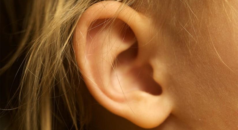 Как работает наш слух и из чего состоит ухо?